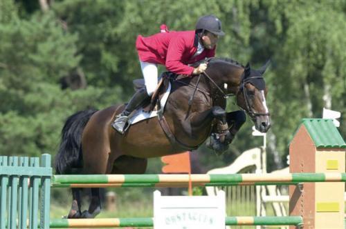 CAP DE B'NEVILLE - Selle Francais (section A) - Cavalog ™