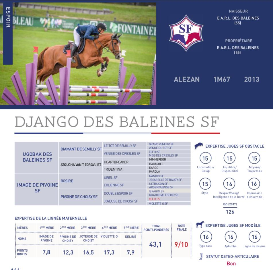 photo_DJANGO DES BALEINES